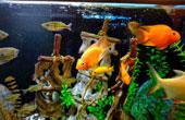 Терморегуляторы для аквариума: разновидности и особенности