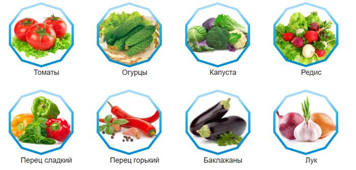 Семена овощей: критерии выбора и правила хранения