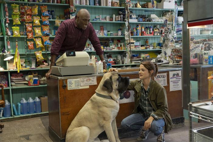 Пёс по кличке Великан прожил свою жизнь с другим хозяином